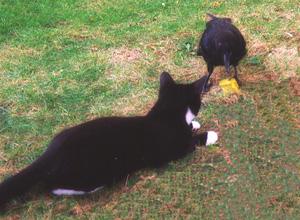 crowcat2.jpg