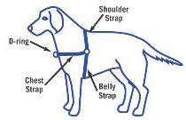 harnessdiagram.jpg