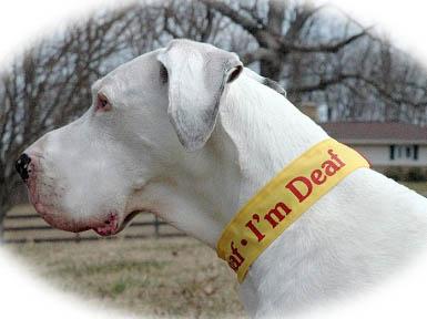 Deaf Blind Amp Shy Dog Apparel Pet Project