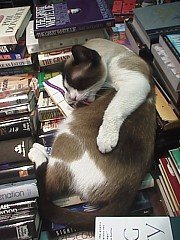 bookstorecat.jpg