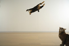 airborne4nanafly.jpg