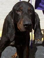 buckhounddogshrunk.jpg