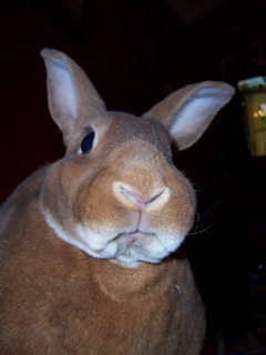 bunnydisapproval.jpg