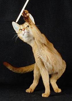 cinnamoncat.jpg