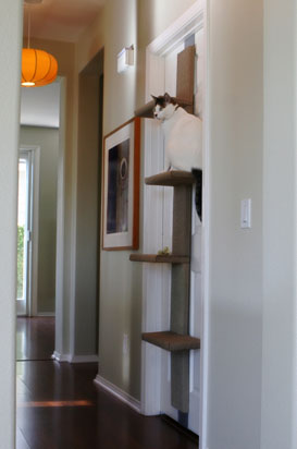 doorcattree-copy