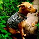 customdogjacket