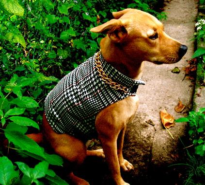 DIY: Custom Fit Dog Jacket – Pet Project
