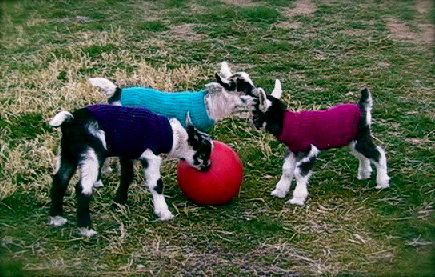 Welcome Home Farm: Sweaters for Kid Goats