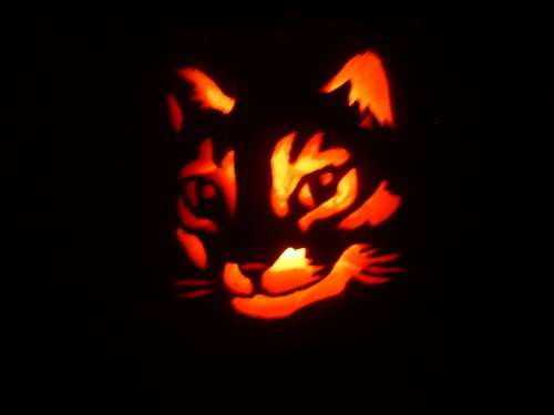 Diy make a pumpkin stencil of your pet project