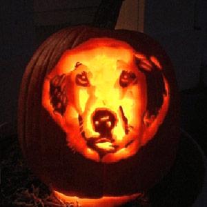 Diy Make A Pumpkin Stencil Of Your Pet Pet Project