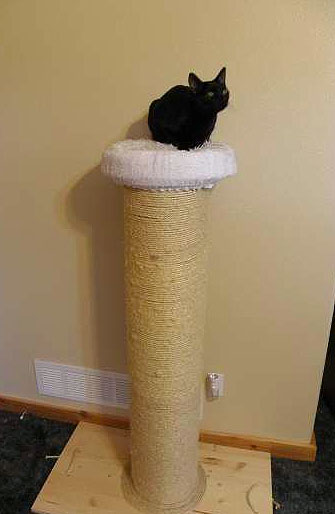 Diy Super Sturdy Scratching Post From Concrete Form Pet