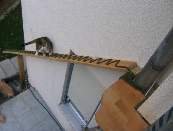We Like Cat Ladders Pet Project