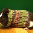 guineapigsweater