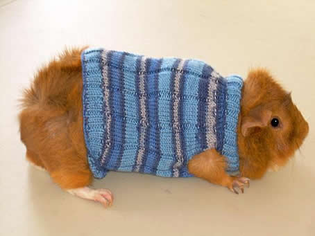 DIY: Guinea Pig Sweaters   Pet Project