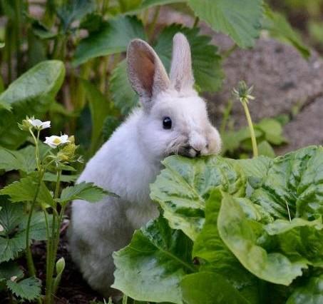 Pet Rabbit Ideas