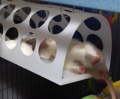 Diy Rat Condos From Ikea Furniture Pet Project
