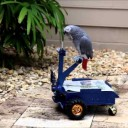 Friday Fun: The Parrot Buggy!