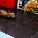 Friday Fun: Cats & Potatoes, No Really