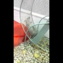 Friday Fun:  The Intricacies Of A Hamster Wheel