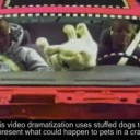 Crash Tests For Dogs
