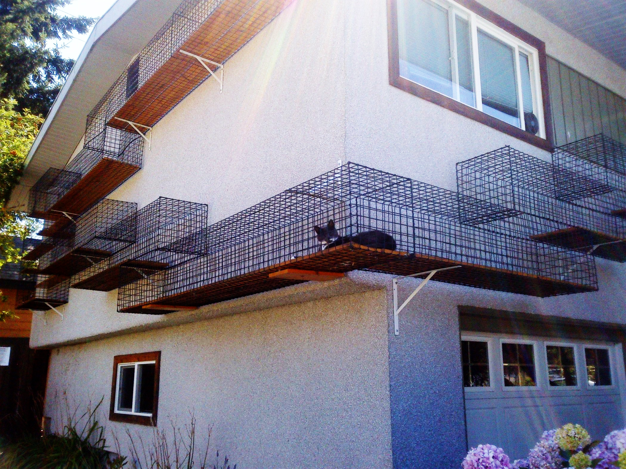 elevatedcatenclosure copy