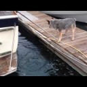 Friday Fun: Sea Otter Teases Cattle Dog