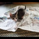 Ohagi The Kitten Helps Read The Paper